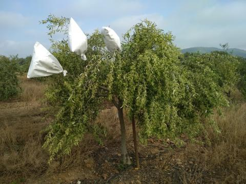 LIFE RESILIENCE and Xylella fastidiosa conference_2