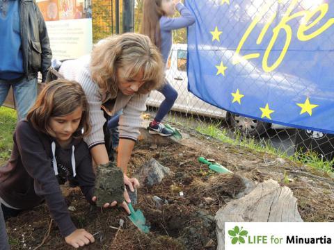 Rescue planting in private garden_1