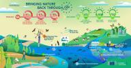 Bringing nature back through LIFE infographic